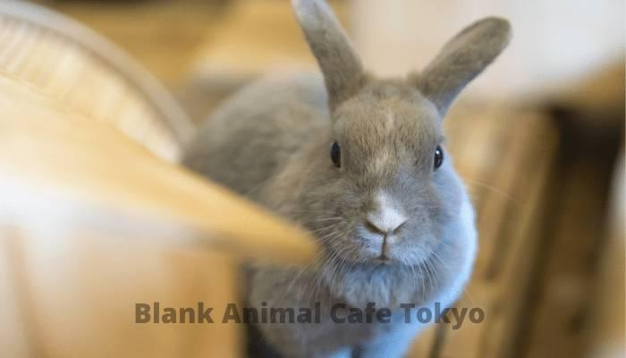 blank animal cafe tokyo crossword clue